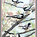 Chickadees in a Tree