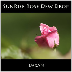 Kiss Silent Lover's Tear Drop, Sunrise Rose Drops Dew Drop - IMRAN  2500+ Views! 100+ Comments (ImranAnwar) Tags: pink flowers summer stilllife macro green home nature square outdoors landscapes suffolk nikon poetry seasons bokeh framed peaceful tranquility longisland lovers lust imran 2010 lifestyles d300 patchogue imrananwar eastpatchogue