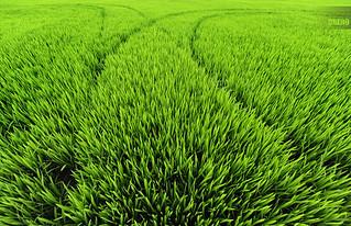 Pasó, y volvió a crecer la hierba ...