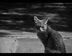 The bad cat... (Pablin79) Tags: bw white black animal digital cat canon eos eyes loneliness shadows bad sunny hungry ef28135mm canonef28135mmf3556isusm canoneos5dmarkii 5dmkii pabloreinschphotography
