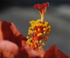 HIBISCUS (Pier * ON/OFF....VERY BUSY) Tags: italy europa europe italia grace montecarlo monaco piemonte hibiscus valley napoli
