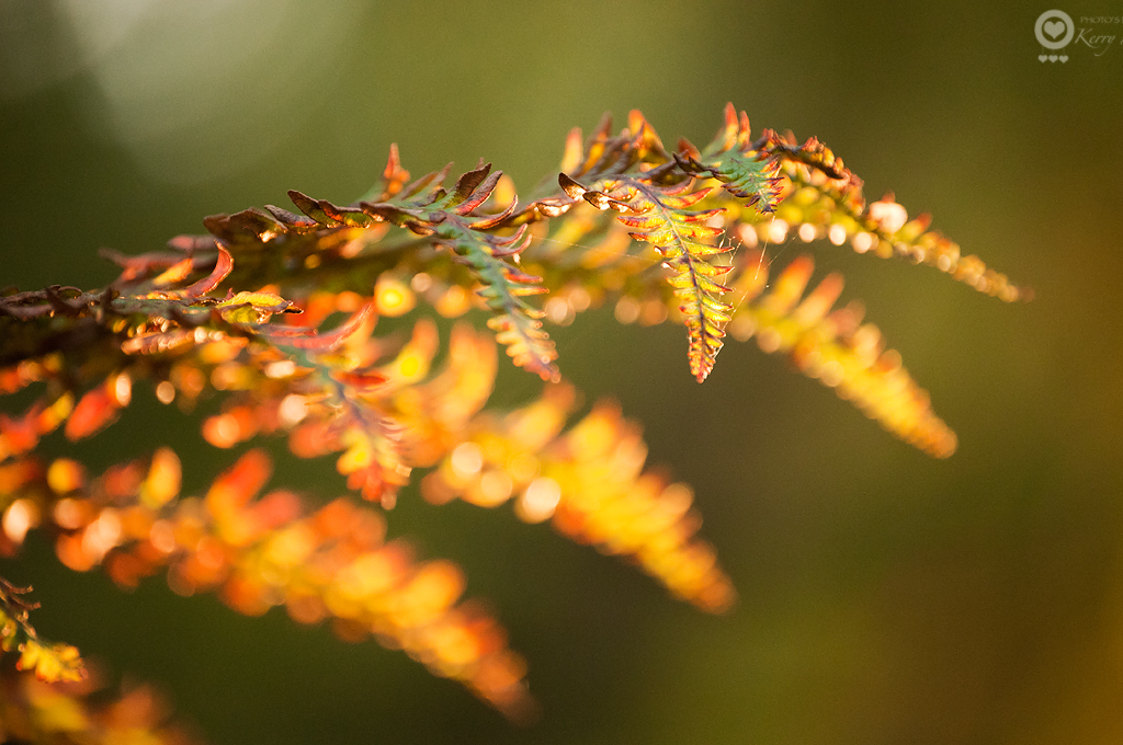264/365 - Autumn is just around the corner