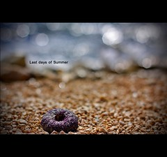 When summer gathers up her robes of glory, And, like a dream, glides away. (*karla) Tags: summer canon 50mm dof bokeh 4 f1