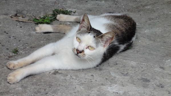 模特儿猫 | flickr –