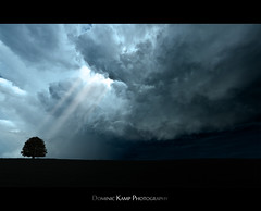 The Chosen One (Dominic Kamp) Tags: life old blue light sea sun tree nature yellow clouds one nikon warm day mood bright god wise enlightenment heavy beams element chosen d700