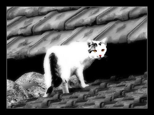 901 White Cat