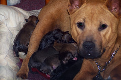 Victoria & Puppies (see video below) (Eldad Hagar (Please support Hope For Paws)) Tags: animalrescue straydog homelessdog dogrescue eldadhagar hopeforpaws wwwhopeforpawsorg eldad75 dogrescuelosangeles hopeforpawsorg straydogrescue