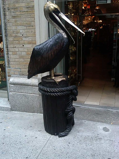 NY pelican