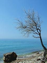 PEACE (Saimir.Kumi) Tags: blue sea sky tree rock tranquility finepix fujifilm lonely albania seashore det s9600 peme qiell shkemb bregdet lukove 26082010