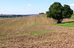 (:Linda:) Tags: tree field germany landscape village thuringia soil erde erdboden milz unterland rhngrabfeld irmelshausen erdreich ackerboden rhoengrabfeld