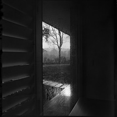 Rain on Glass (alistair dickinson) Tags: blackandwhite house tree 120 6x6 film rain mediumformat country  hills perth ilfordfp4plus hasselblad500cm homedeveloped nomealice cafenolc carlzeissdistagon60mmf35cft 20minutes22c