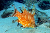 "hogfish juv • <a style=""font-size:0.8em;"" href=""http://www.flickr.com/photos/45090383@N06/4979778608/"" target=""_blank"">View on Flickr</a>"