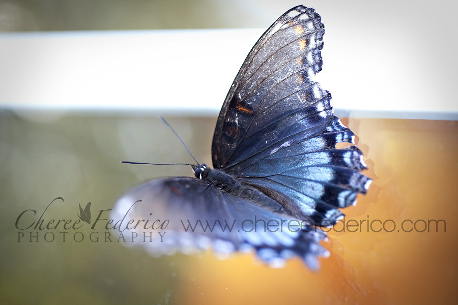 Blue butterfly on orange