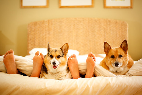 Day 255 - Comfy Friends and Their Corgis
