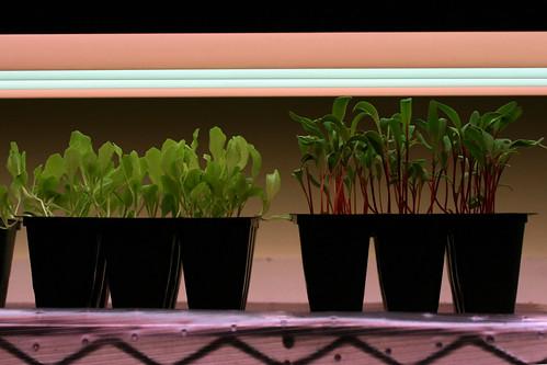 seedlings 1