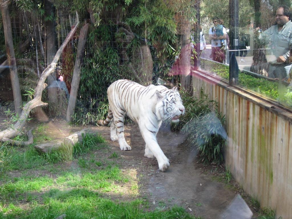 Buenos Aires: Jardín Zoológico, Palermo