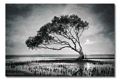 I Was Questioning and Looking Back (Matthew Stewart | Photographer) Tags: trees reflection tree water fog sunrise dead still australia brisbane mangrove qld queensland mangroves cunninghamhighway beachmere lakemoogerah