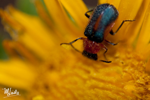 bug flower 2