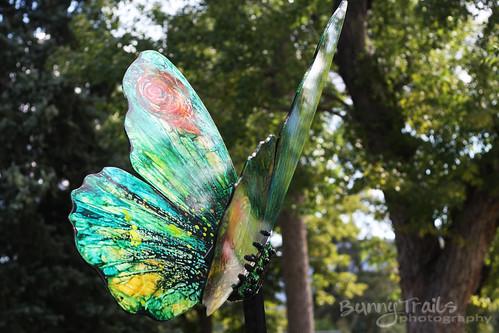 260-butterfly-1