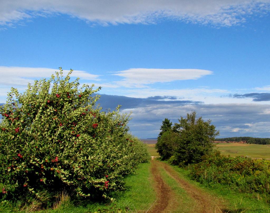 Orchard Lane