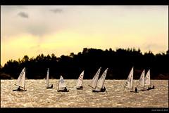 Toy Sailors (Geir Vika) Tags: laser sail srlandet kristiansand vika geir ksf