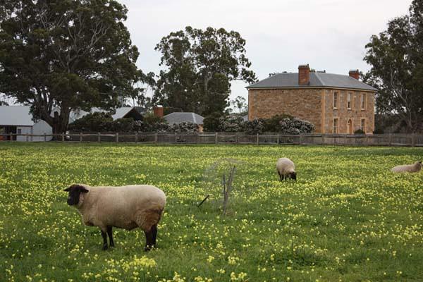 Penny's Hill - McLaren Vale - South Australia