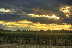 Harvest Sunset (Matt Champlin) Tags: life autumn sunset sunlight storm fall nature clouds rural landscape corn farming harvest scenic stormy fields upstatenewyork farms centralnewyork rays beams sunbeams elbridge