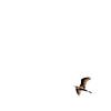 Vuelo solo (.I Travel East.) Tags: life light sky usa lake bird heron sepia freedom nikon louisiana air flight free minimal lakeshoredrive east explore lsu batonrouge lakeshore duotone minimalism nikkor lucio 70200mm splace batonrougelouisiana lsulakes itravel soloflight nikkor70200mmf28vr d700 nikond700 itraveleast vuelosolo
