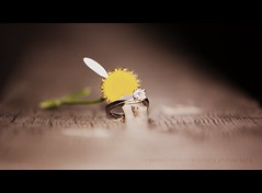 He Loves Me (Becky McCreary) Tags: flower love canon one engagement dof engagementring ring depthoffield petal daisy inlove rebeccamccreary