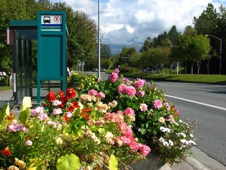 landscaping at bus stop (by: municipality of Anchorage)
