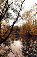 Autumn River 2 (Leonce Markus) Tags: autumn france reflection water automne river leaf eau rivire reflet reflets feuille fleuve loiret