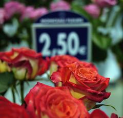 355/365 25.09.2010 (Jack_from_Paris) Tags: red orange flower detail fleur rose yellow fleurs jaune project rouge lumix bokeh couleurs pastel prix micro 365 250 43 euros projet monceau ptales dmcf1 project365 nervure pancake20mmf17asph p1000891gf1