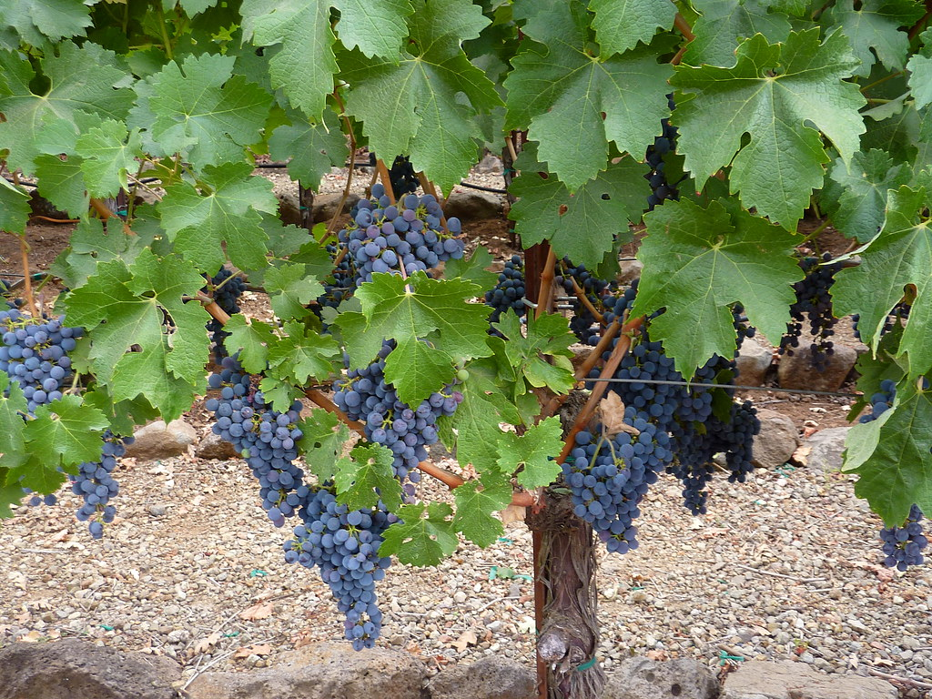 P1020110R3 California Wine Country Sonoma Valley