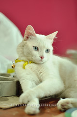 waiting !! (bastoony) Tags: pink cats yellow cat waiting bored boring