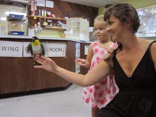 holding a bird