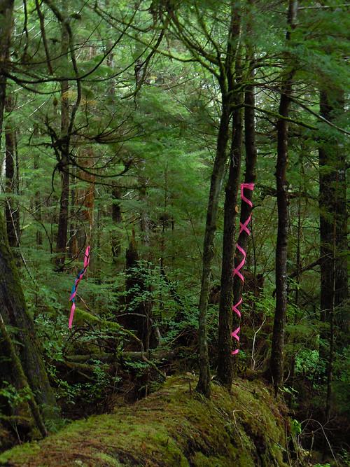 boundary marker tape, Kasaan, Alaska