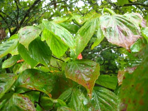 natnote raindogwz
