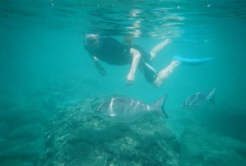 Snorkling at Shark's Cove, Oahu, Hawaii