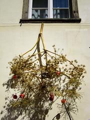 Dried (antoniocasorelli) Tags: finestra giallo ramo rosso mele secco profumo finocchio davanzale atestaingiù