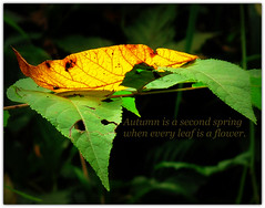 The Solace of Nature (JC Shamrock) Tags: autumn beautiful beauty leaves peace quote calming simplicity simple autumnal yellowleaf yellowgreen solace ashlandnaturecenter secondspring lightlanding