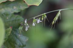 三保市民の森の花