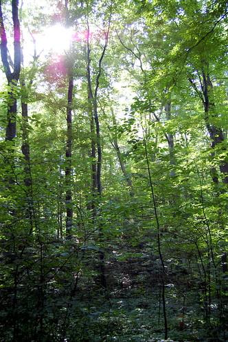 The Sacred Grove