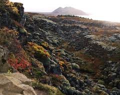(Runar F) Tags: autumn island lava iceland islandia autumncolors islande hraun islanda ingvallavatn lakethingvallavatn
