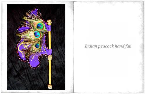 peacockfan