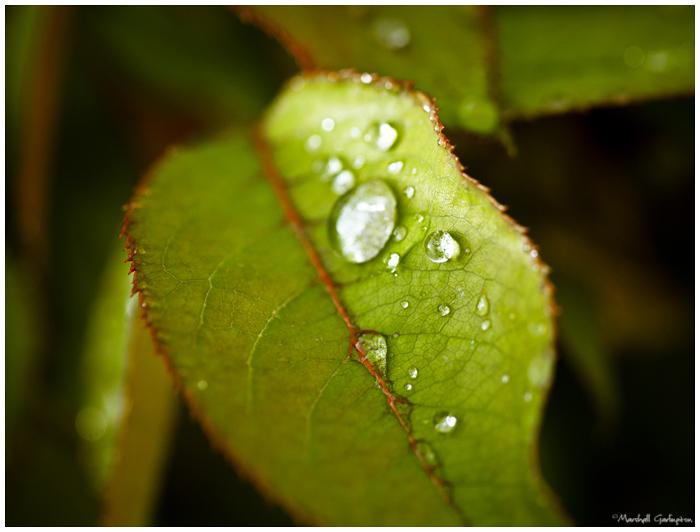 During Rain Leaf