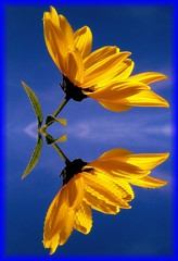 Magical (sabrina. G) Tags: september gelb blau reflektion magisch digitalcameraclub topshots masterphotos mywinners flickrdiamond theunforgettablepictures natureselegantshots 100commentgroup