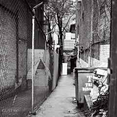 L'impasse (GUSTAVimages) Tags: life street newyorkcity usa white newyork black peoples gustav yashica124mat