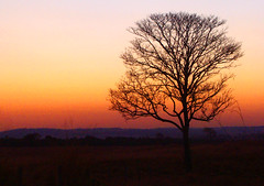 Solitude (osvaldoeaf) Tags: light sunset red brazil sky orange sun tree nature night landscape dawn evening day shine dusk horizon cerrado goinia gois afternoong