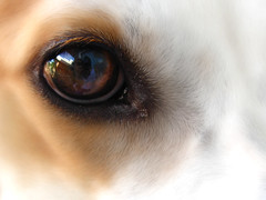 through the eyes of love (life begins with 4t) Tags: travel dog pet macro eye art nature animal closeup canon puppy fur photography philippines canine marikina 4t dogseyes abigfave impressedbeauty imagesforthelittleprince 4tsuarez