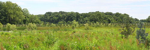 Floodplain easement with prairie plants and trees established in approximately five years.